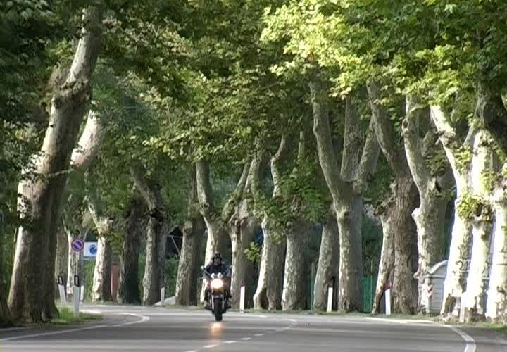 Le alberate stradali e le piante antismog